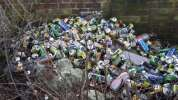 Beer cans dumped in bushes