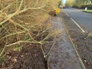Fallen tree obstructing shared cycle/footpath