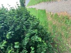 Overhang, 31st July