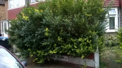 Street sign is obstructed by overgrown hedge, 26th July